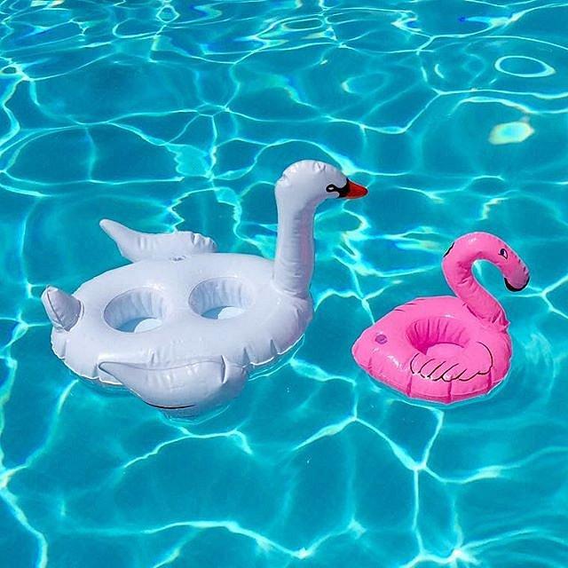 A family affair #swan #pool