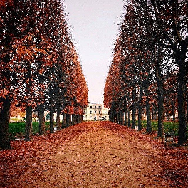 An Autumn morning #paris #autumn #automne #jardinduluxembourg #luco #luxemboug