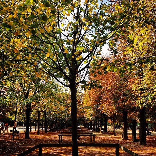 Couleurs d'automne #automne #luxemboug #luco #jardinduluxembourg #autumn #paris